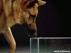 Ever wondered how dogs drink water?