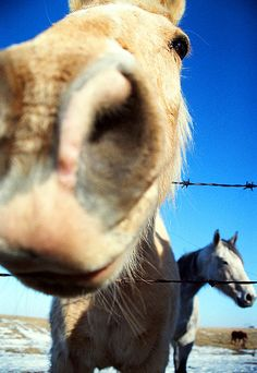 close-up of a horses face by troycochrane, via Flickr