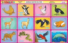 Peru, Education, Library Decorations, Peruvian Art, Preschool Learning Activities, Kids, Turkey, Educational Illustrations, Learning