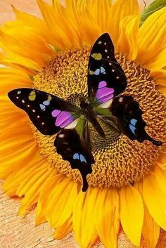 May the wings of the butterfly kiss the sun And find your shoulder to light on, To bring you luck, happiness and riches Today, tomorrow and beyond. ~Irish Blessing