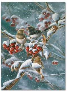 Trademark Global Wanda Mumm 'Junco And Crab Apple' Canvas Art - 32 x 24 x 2 Christmas Bird, Christmas Scenes, Christmas Animals, Retro Christmas, Christmas Pictures, Winter Christmas, Christmas Crafts, Artist Canvas, Canvas Art