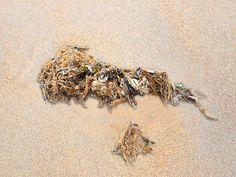 'Strandgut-Stilleben 2/8' von Dirk h. Wendt bei artflakes.com als Poster oder Kunstdruck $19.41