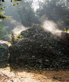 Hot Composting -- includes chart of carbon and nitrogen content of various materials