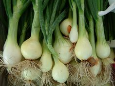 Unlimited green onions all year long!