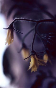 2012 Pentax Spotmatic - Volna-9 heinäk_041 Fish, Pets, Flowers, Animals, Animales, Animaux, Pisces, Animal, Animais