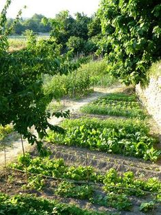 Potager Garden My village, south of France, kickcan Potager Garden, Veg Garden, Edible Garden, Garden Landscaping, Terrace Garden, Landscaping Design, Vegetable Gardening, Garden Beds, Permaculture