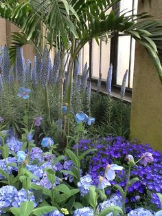 Blue Poppy and mixed flowers at Longwood Gardens