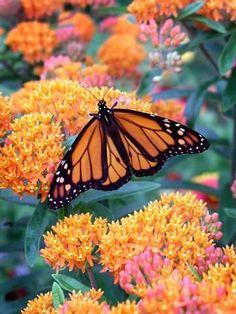 Bring in the Butterflies | The Garden Glove