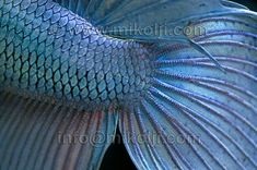 TROPICAL FISH CLOSE UP - Google Search