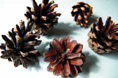 Try adding cinnamon fragrance to pine cones to make cinnamon cones driedflowercraft.co.uk