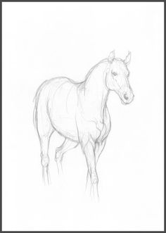 Horse simple drawing original pencil sketch by intuicio on Etsy