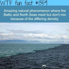 Natural phenomenon where Baltic and North Seas meet but don't mix because of the different density #travelfacts