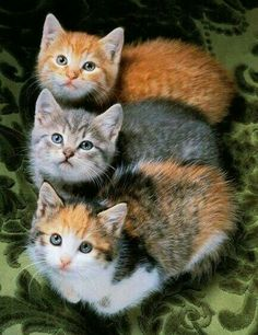 adorable kittens!!!