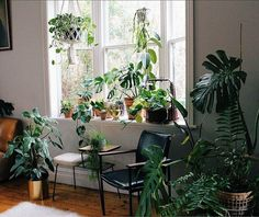 """10.5 mil curtidas, 48 comentários - Urban Jungle Bloggers™ (@urbanjungleblog) no Instagram: """"Plants can't solve all problems, but they're a great start.   by @plantmama_…"""""""