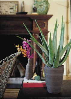 Needing very little maintenance and the ability to survive in different conditions, the aloe vera plant is the ultimate house plant for those with a hectic lifestyle. Coming in a variety of shapes and sizes, the prickly green plants bring life into the home while adding a nice decorative touch. Rebecca says they're also practical, and the gel inside is a great home remedy for sunburn! So if you get caught out by the Great British summer, they're perfect to have on standby in the house.