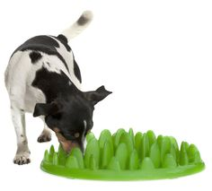 Green pet feeder by Northmate
