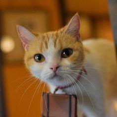 にゃ!見つかったにょだっ! #じゃらん #CM #遊び体験予約 #にゃらん #旅 #猫 #ねこ #cat #trip #ニャンスタグラム #おでかけ #Japan