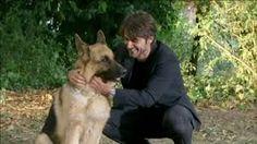 Rex Tattoo, Dogs, Animals, Animales, Animaux, Pet Dogs, Japanese Tattoos, Doggies, Tattoos