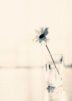 Easy Love (minimalist flower photography) Framed Art Print by Caroline Mint - Vector Black - Minimal Photography, Framing Photography, Art Photography, Flower Photography, Bathroom Flowers, Flower Photos, Love Art, Life Is Beautiful, Framed Art Prints