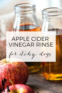 DIY apple cider vinegar for itchy dogs: Do you have an itchy dog? Does your pup … DIY apple cider vinegar for itchy dogs: Do you have an itchy dog? Does your pup suffer from skin ickiness that varies by season? Dog Flea Remedies, Allergy Remedies, Apple Cider Vinegar Dogs, Fall Allergies, Itchy Dog, Dog Recipes, Natural Remedies, Dog Care, Pets