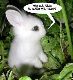Resultado de imagem para coelhos bonitos