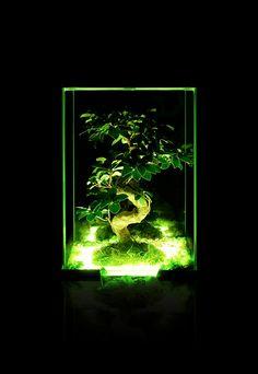 Neon Night- modern interior garden (tarrarium) Material: corian, optiwhite glass, LED, reindeer moss, bonsai