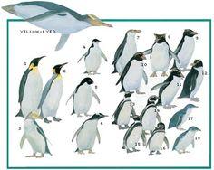 The World's Penguins