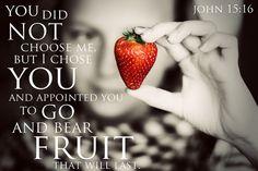 Reflection verse of the week: John 15:16