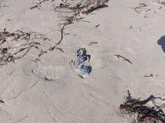 Beach Panties! Found August 12, 2013 at the San Simeon State Park Beach, CA.