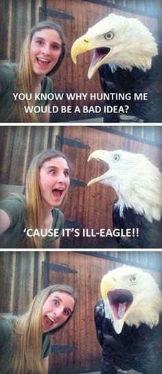 "GUYS THIS IS ME IN APUSH. ""illeagle to eat an eagle"""