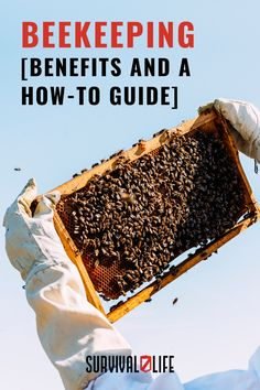 There's nothing like the sweetness of honey, and when SHTF you can sustain yourself with a supply of it. Beekeeping gives us many useful products and food, including honey and beeswax. Beeswax is used for both candles and soap, and honey has dozens of uses. #beekeeping #survivalskill #survivaltips #survivallife Survival Hacks, Survival Life, Survival Skills, Bee Pollen, Wound Healing, Beekeeping, Shtf, Perfect Food, Growing Vegetables