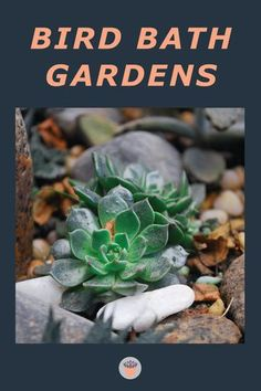 Don't give up on your cracked or damaged stone or concrete bird bath; they make perfect bird bath gardens. Fill it with succulents, trailing over the edge, or make it into a miniature garden. #succulentgarden #plantdecor #succulentarrangements Small Succulents, Succulents Garden, Garden Plants, Concrete Bird Bath, Bird Bath Garden, Succulent Arrangements, You Gave Up, Don't Give Up, Flower Beds