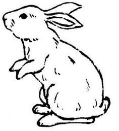 Image result for how to draw a rabbit