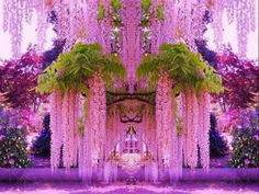 Purple Wisteria (Cherry blossom Tree) in Japan