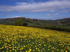 Uplyme Meadows - East Devon Area of Outstanding Natural Beauty