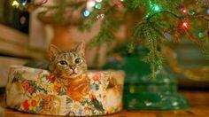 imágenes-navideñas-postales-de-Navidad