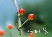 단월드 힐링>브레인 휴休 명상 - 대한민국 두뇌포털 브레인월드