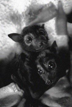 Awww!! I want a fox bat!