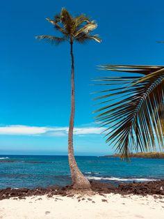 °Die einsame Palme am Strand von Pu'uhonua O Honaunau. °The lonely palm tree on the beach of Pu'uhonua O Honaunau. Big Island Hawaii, Strand, Palm Trees, Lonely, Beach, Black Sand, Small Restaurants, Car Rental, Snorkeling