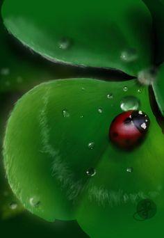 Ladybug drawing DS2