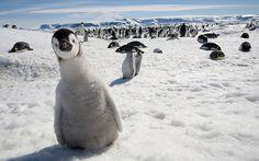 penguins =)