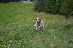 Gårdstunet Hundepensjonat: Deilige dager med blide hunder på tunet!