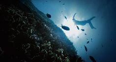 The Sanctuary of Us  Quand Guillaume Néry, champion du monde d'apnée, dont nous avons déjà parlé, plonge à -125 mètres sous l'eau, il est victime de narcose, qu'on appelle aussi ivresse des profondeurs. De ces hallucinations sous-marines, Julie Gautier, sa compagne en a tirée un court métrage qui nous emmène dans un voyage vers l'inconscient : Narcose