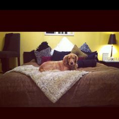 My favorite things to come home to, my dog and my bed!