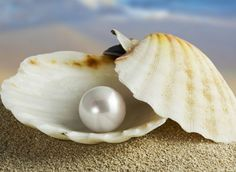 The precious pearl . . .