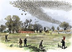 "Illustration: ""Passenger Pigeon Flock Being Hunted in Louisiana,"" by Smith Bennett, 1875. Credit: ""The Illustrated Shooting and Dramatic News""; Wikimedia Commons. Read more on the GenealogyBank blog: End of Her Kind: Martha, the Last Passenger Pigeon, Dies https://blog.genealogybank.com/end-of-her-kind-martha-the-last-passenger-pigeon-dies.html"