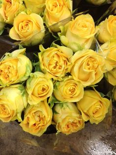 Home Delivery Service Rose Called Turtle Sold In Bunches Of 20 Stems From The