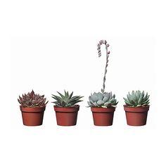 $2.99 SUCCULENT Potted plant IKEA
