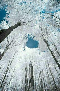 하얀 숲 속
