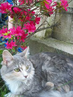 Cat and Flowers, by andrewmcmannqeuin, via Flickr